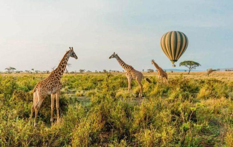 FLC đề xuất ý tưởng quy hoạch khu đô thị sinh thái Tây Nam TP Bà Rịa, Tổ hợp Núi Dinh và vườn thú hoang dã Safari